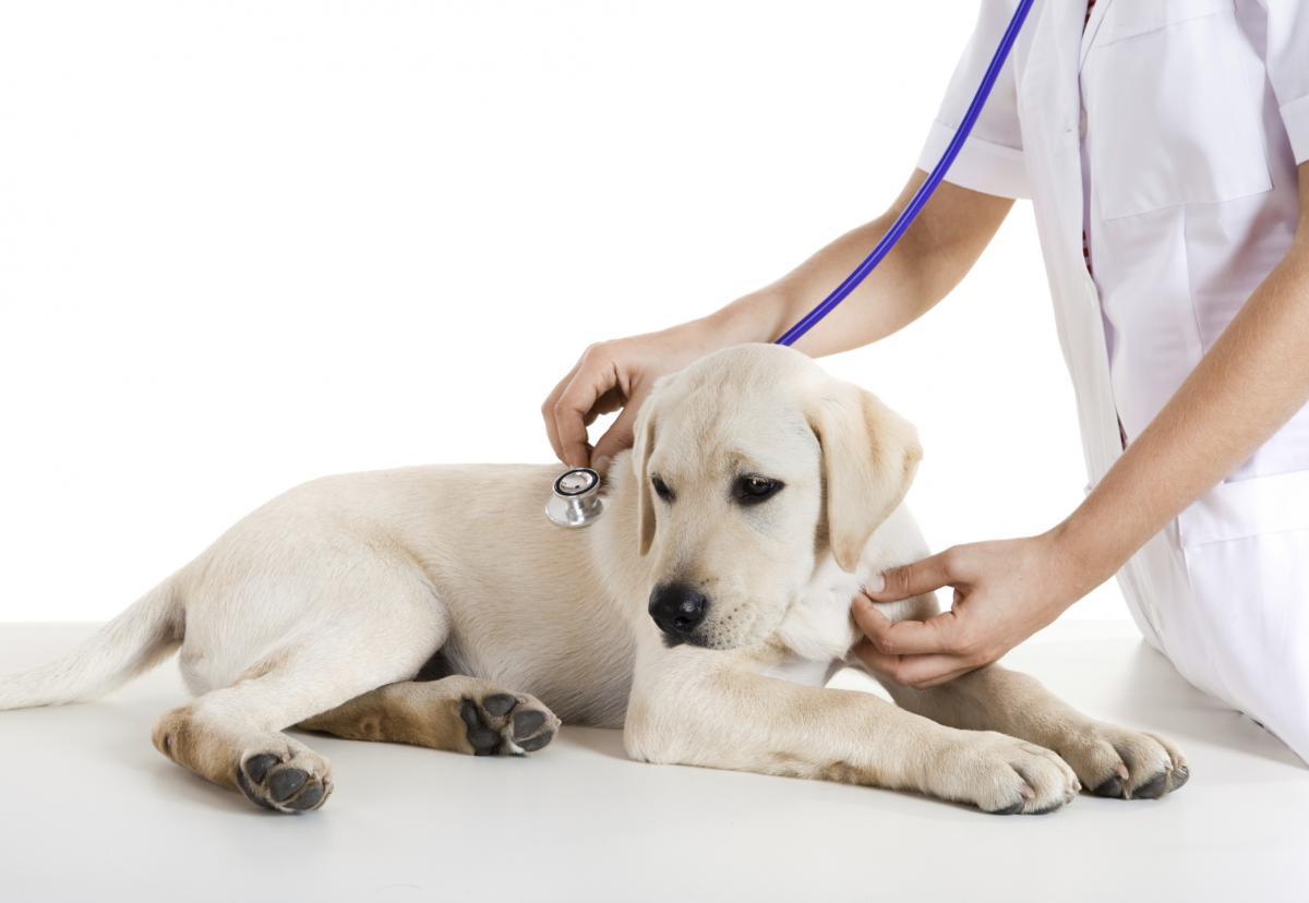 Comment savoir si votre chien est malade