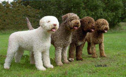 dresser son chien pour les truffes